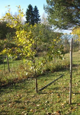Rakenna puutarhaan jänisaita ja varjostuskehikot
