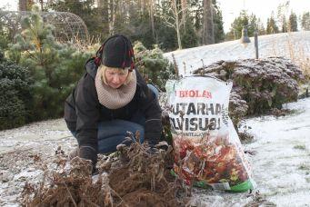 Suojaa arat perennat ja köynnökset Talvisuojalla