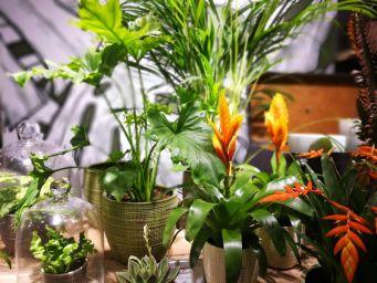 Huonekasvitrendit