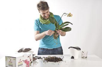 Näin hoidat orkideoita oikein