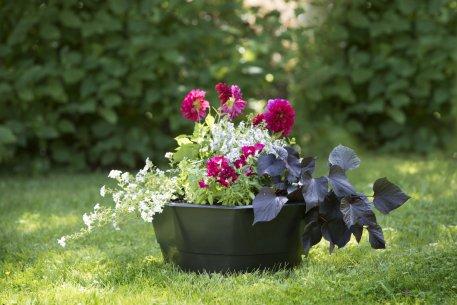 Biolan Вазон для выращивания цветов