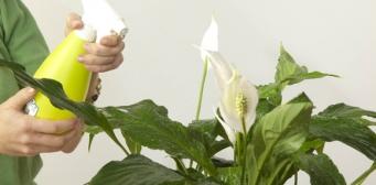 Skötsel av rumsväxter på vintern