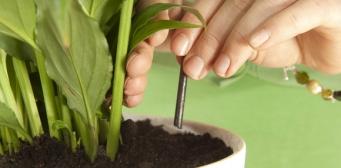 Gödsling av rumsväxter