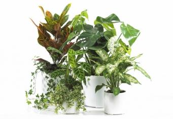 Huonekasvien hoito talvikuukausina