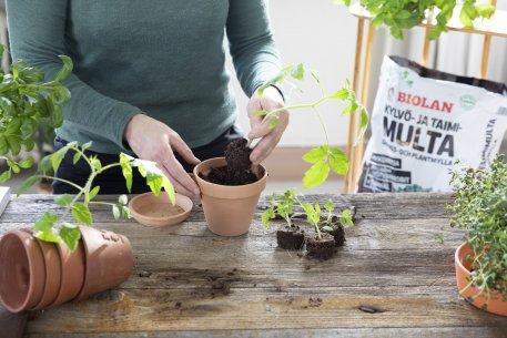 Biolan Грунт для посева и пикировки