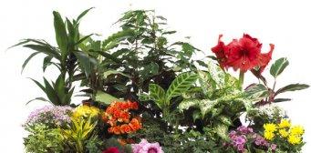 Huonekasvien hoito -opas