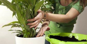 Huonekasvien mullanvaihto
