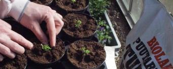Ofta ställda frågor om växtunderlag