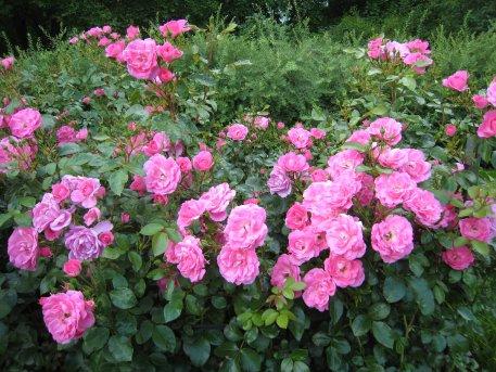 Biolan Грунт для роз