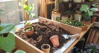 Taimikasvatuksella aikaistamaan kasvukautta