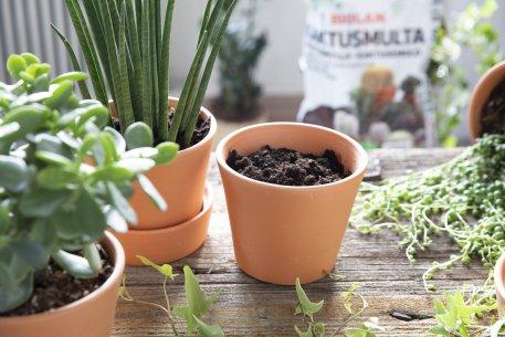 Biolan Kaktusmulta