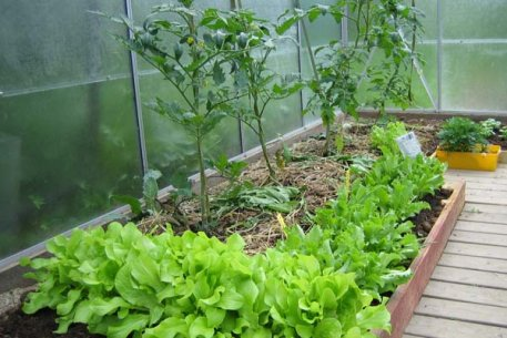 Biolan Kasvuturve