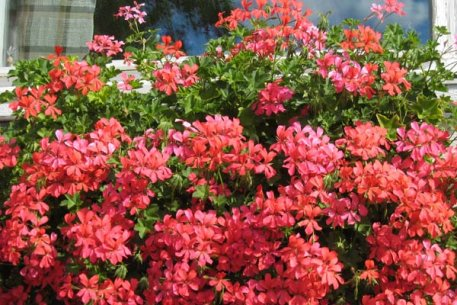 Biolan Грунт для летних цветов