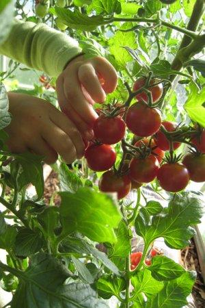 Biolan Пакет для выращивания