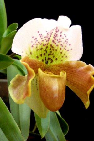 Biolan Субстрат для орхидей