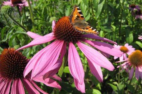 Biolan Посадочное и осеннее удобрение