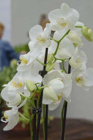 Rain Mix by Biolan orkidealannoite