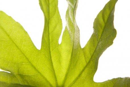 Biolan Havsalgextrakt